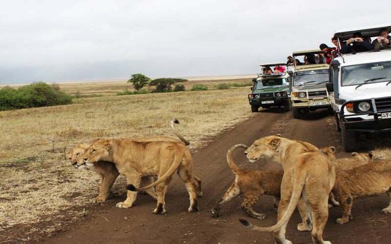 7 DAYS ADVENTURE SAFARIS
